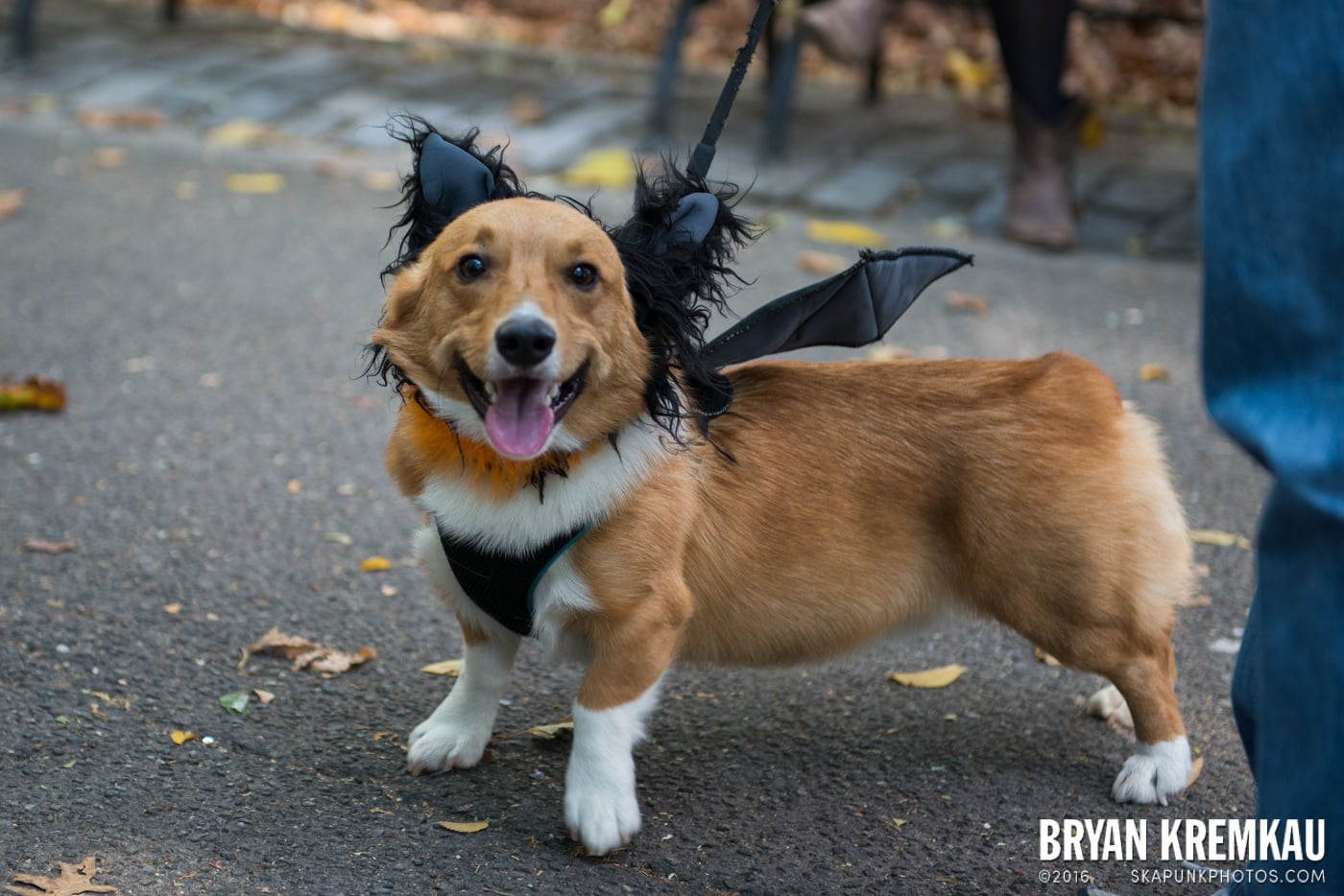 Tompkins Square Halloween Dog Parade 2013 @ Tompkins Square Park, NYC - 10.26.13 (30)