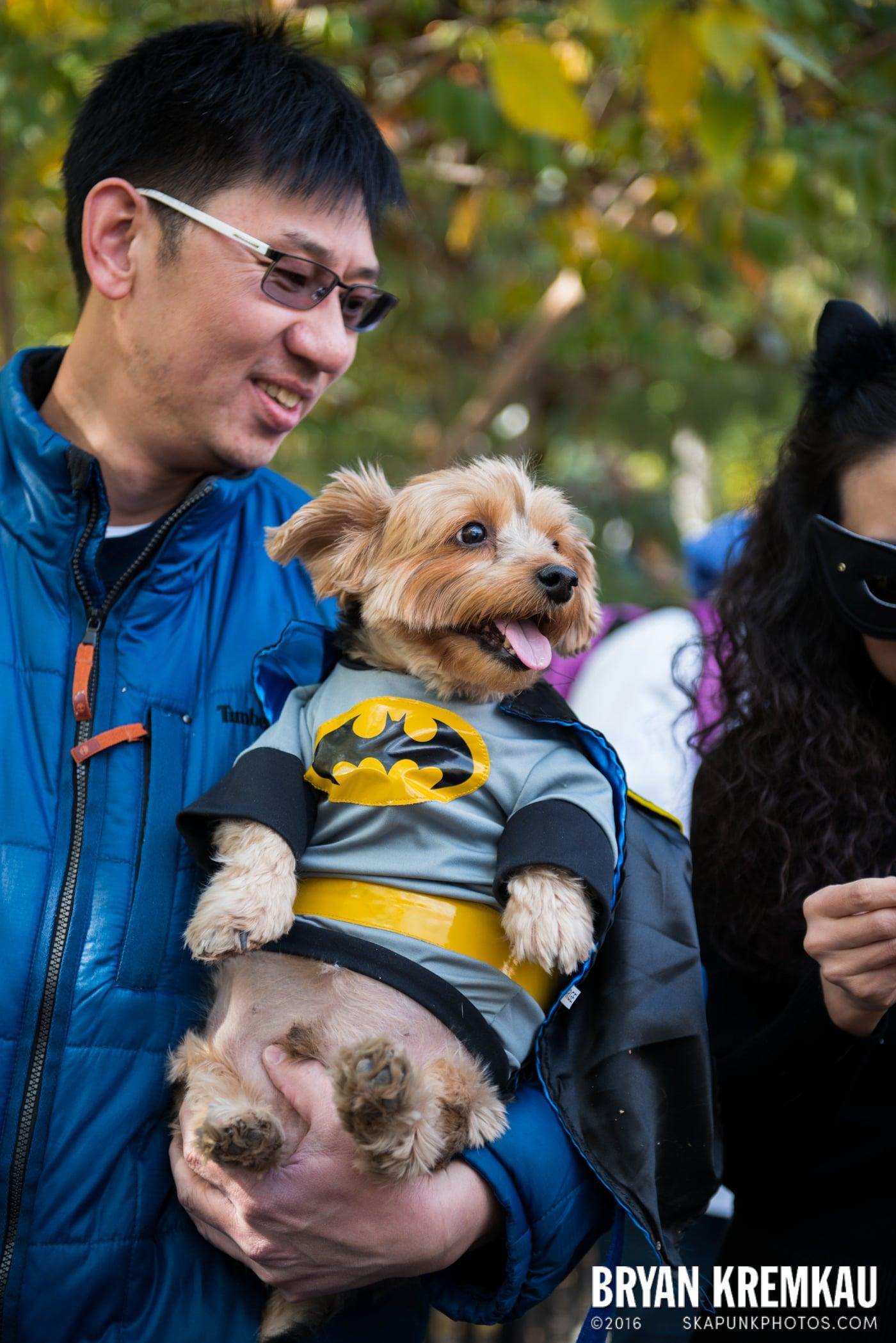 Tompkins Square Halloween Dog Parade 2013 @ Tompkins Square Park, NYC - 10.26.13 (25)