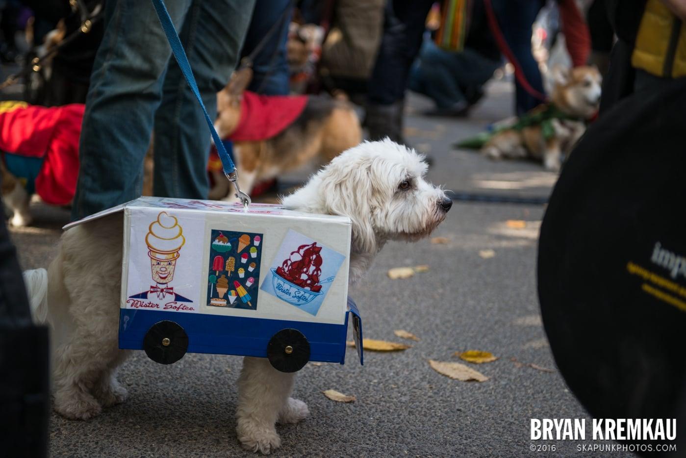 Tompkins Square Halloween Dog Parade 2013 @ Tompkins Square Park, NYC - 10.26.13 (24)