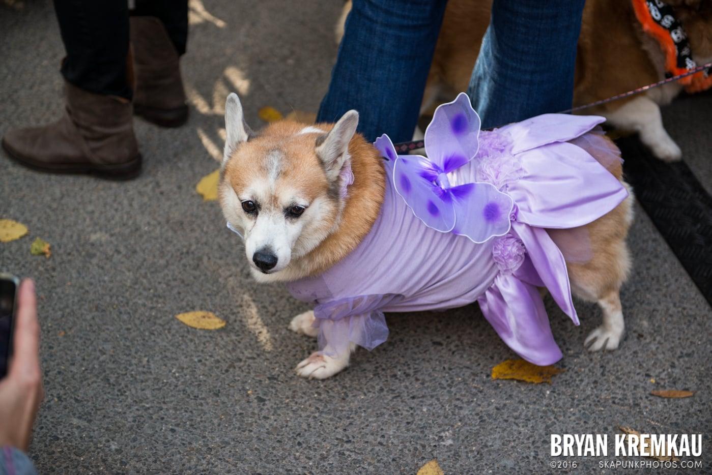 Tompkins Square Halloween Dog Parade 2013 @ Tompkins Square Park, NYC - 10.26.13 (23)