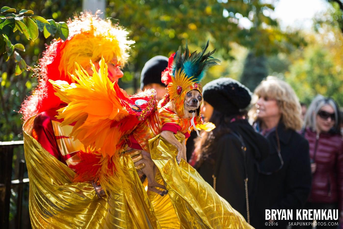 Tompkins Square Halloween Dog Parade 2013 @ Tompkins Square Park, NYC - 10.26.13 (22)