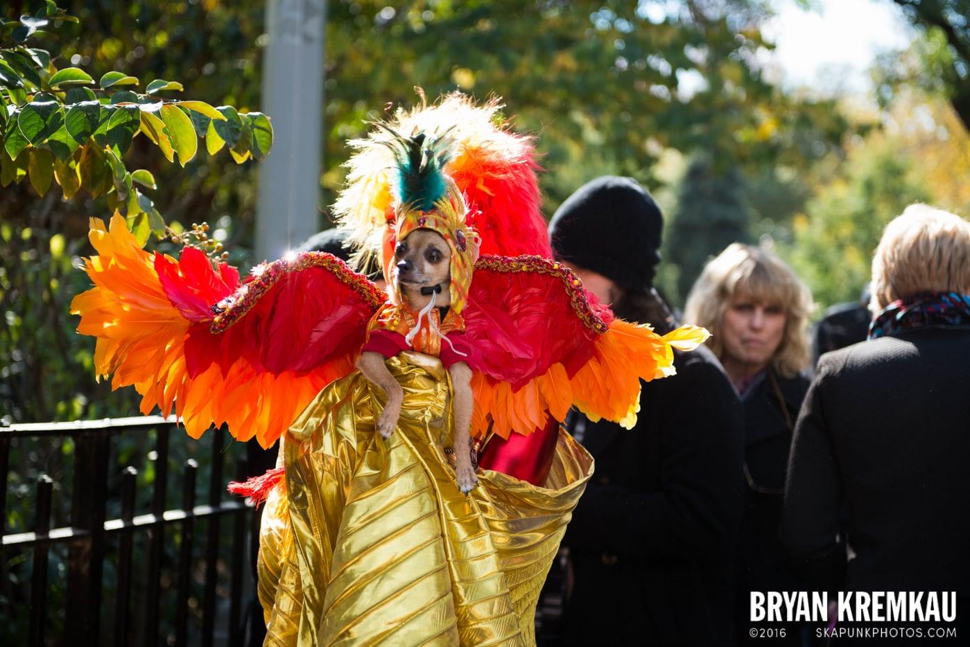 Tompkins Square Halloween Dog Parade 2013 @ Tompkins Square Park, NYC - 10.26.13 (21)