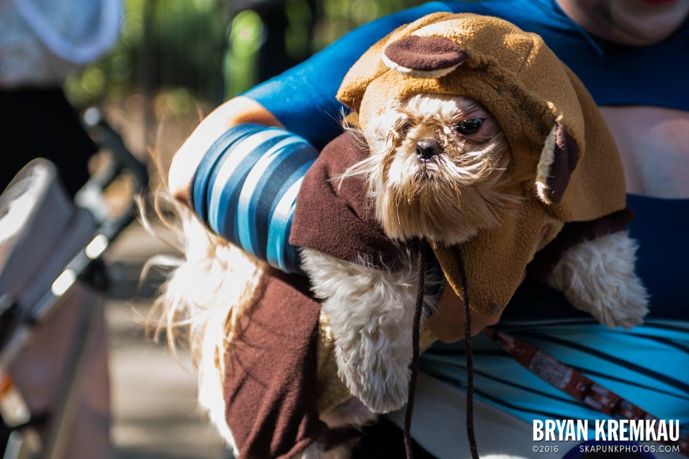 Tompkins Square Halloween Dog Parade 2013 @ Tompkins Square Park, NYC - 10.26.13 (19)
