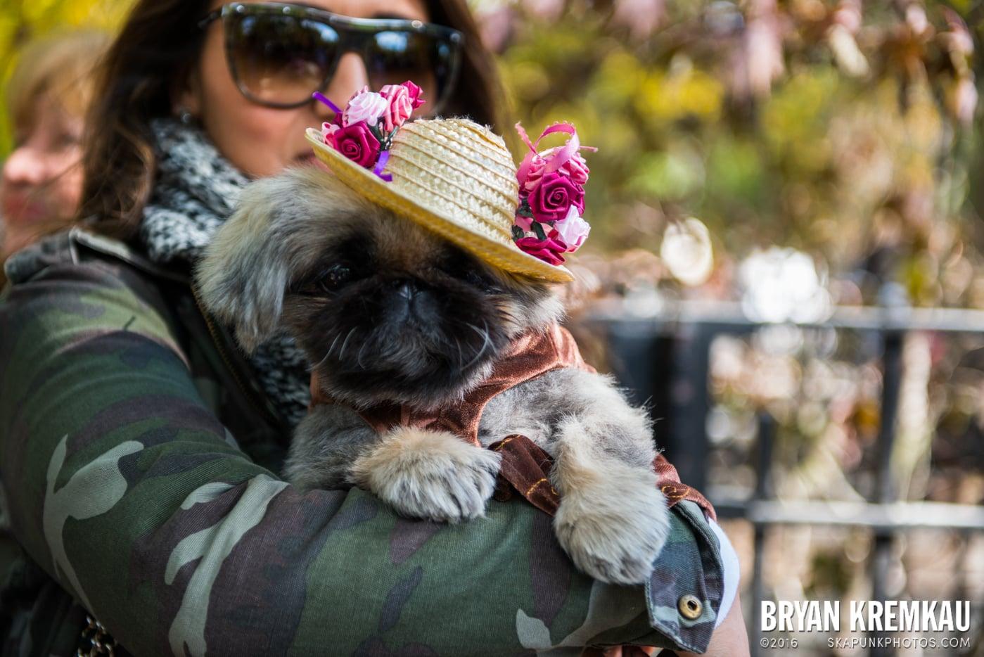 Tompkins Square Halloween Dog Parade 2013 @ Tompkins Square Park, NYC - 10.26.13 (18)