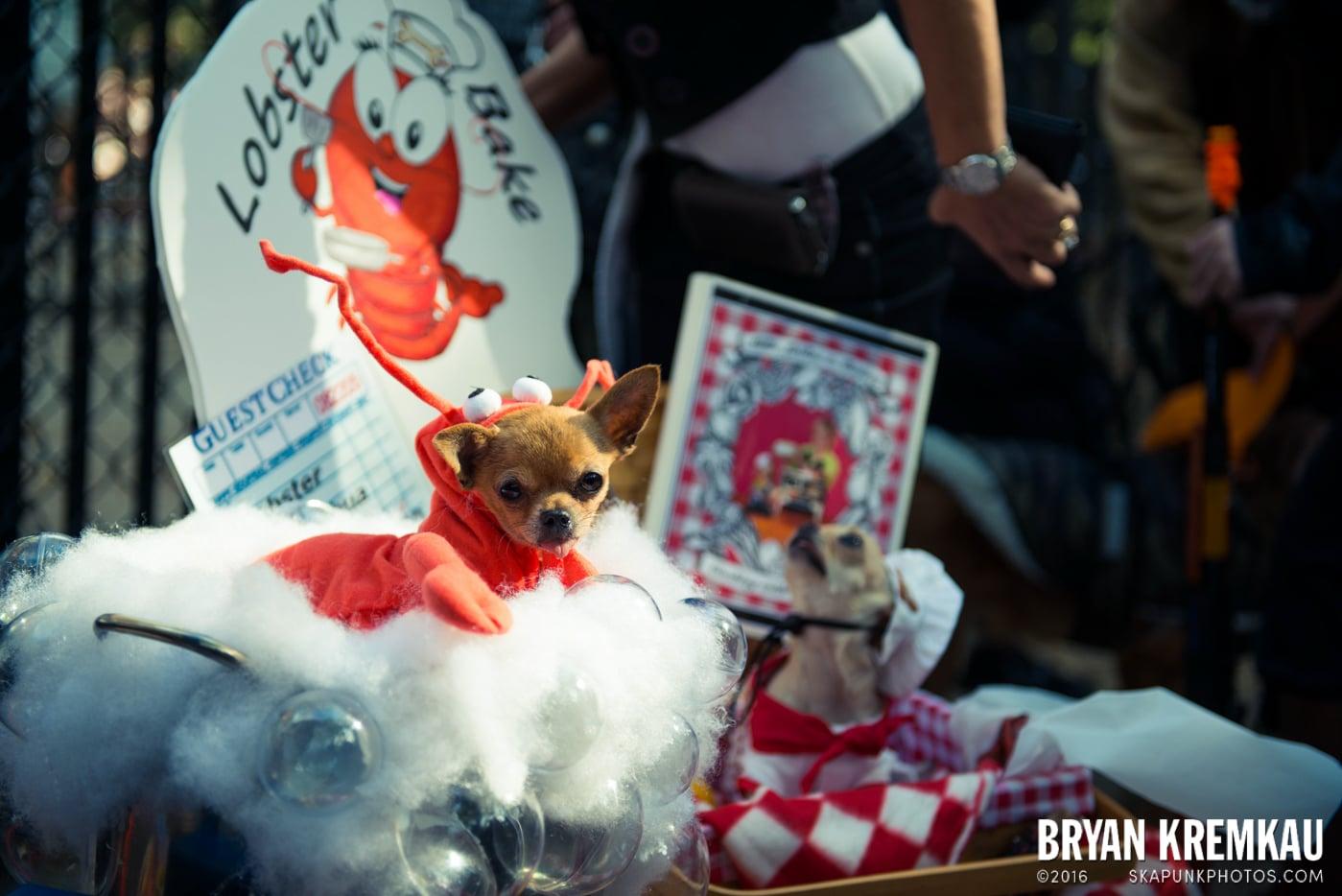 Tompkins Square Halloween Dog Parade 2013 @ Tompkins Square Park, NYC - 10.26.13 (15)