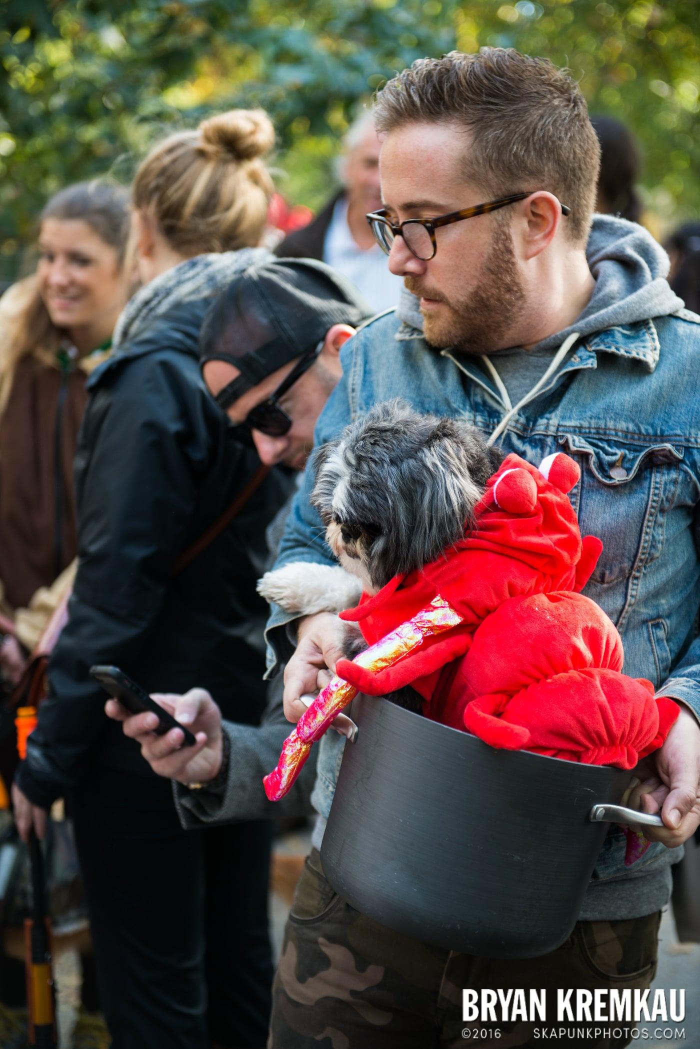 Tompkins Square Halloween Dog Parade 2013 @ Tompkins Square Park, NYC - 10.26.13 (14)
