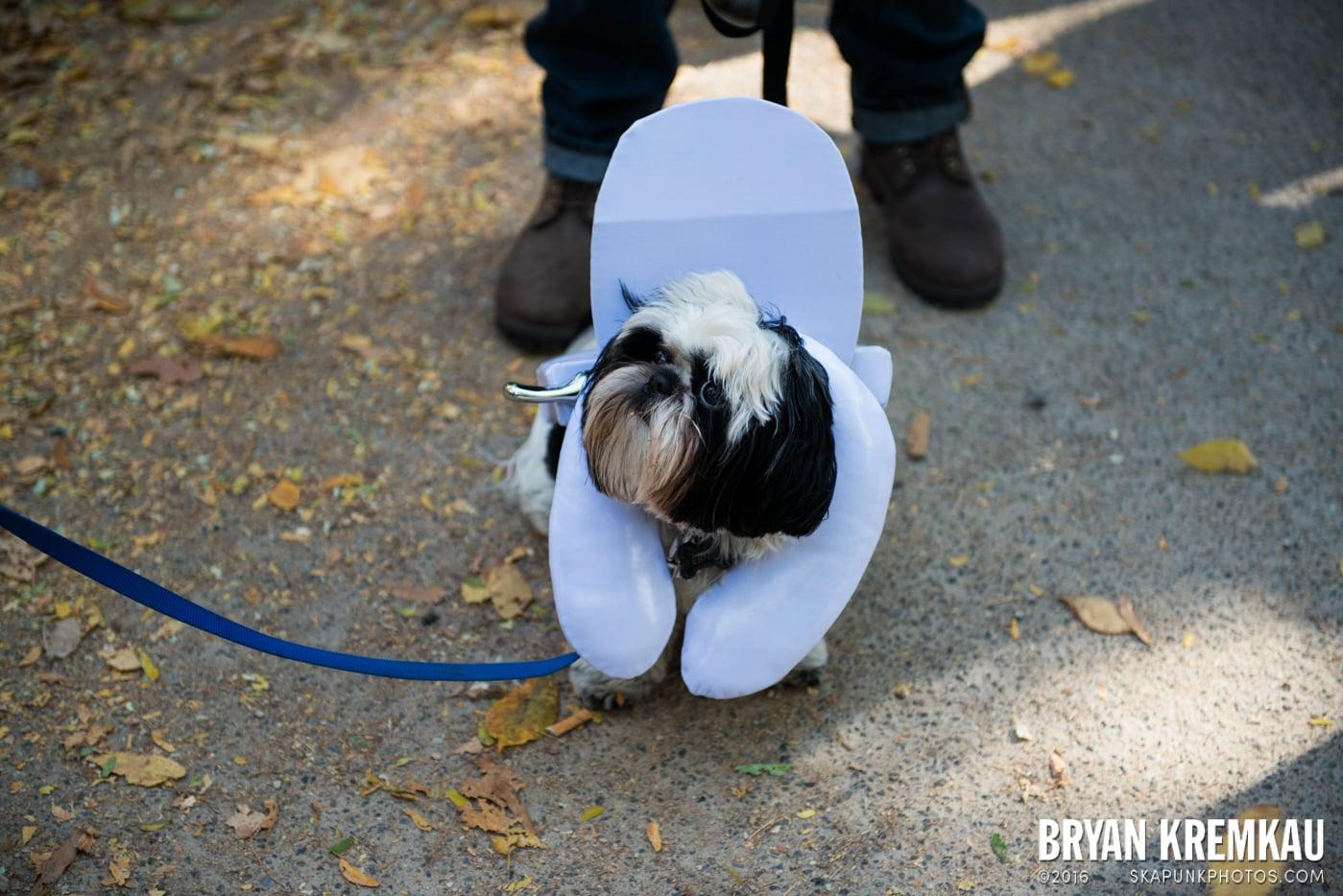Tompkins Square Halloween Dog Parade 2013 @ Tompkins Square Park, NYC - 10.26.13 (12)