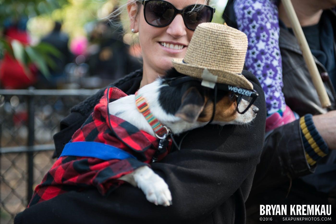Tompkins Square Halloween Dog Parade 2013 @ Tompkins Square Park, NYC - 10.26.13 (8)