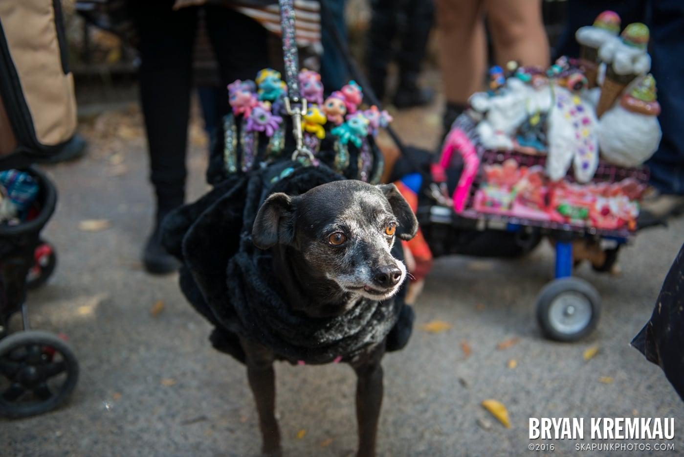 Tompkins Square Halloween Dog Parade 2013 @ Tompkins Square Park, NYC - 10.26.13 (7)