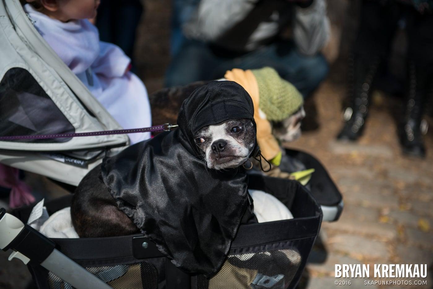 Tompkins Square Halloween Dog Parade 2013 @ Tompkins Square Park, NYC - 10.26.13 (5)
