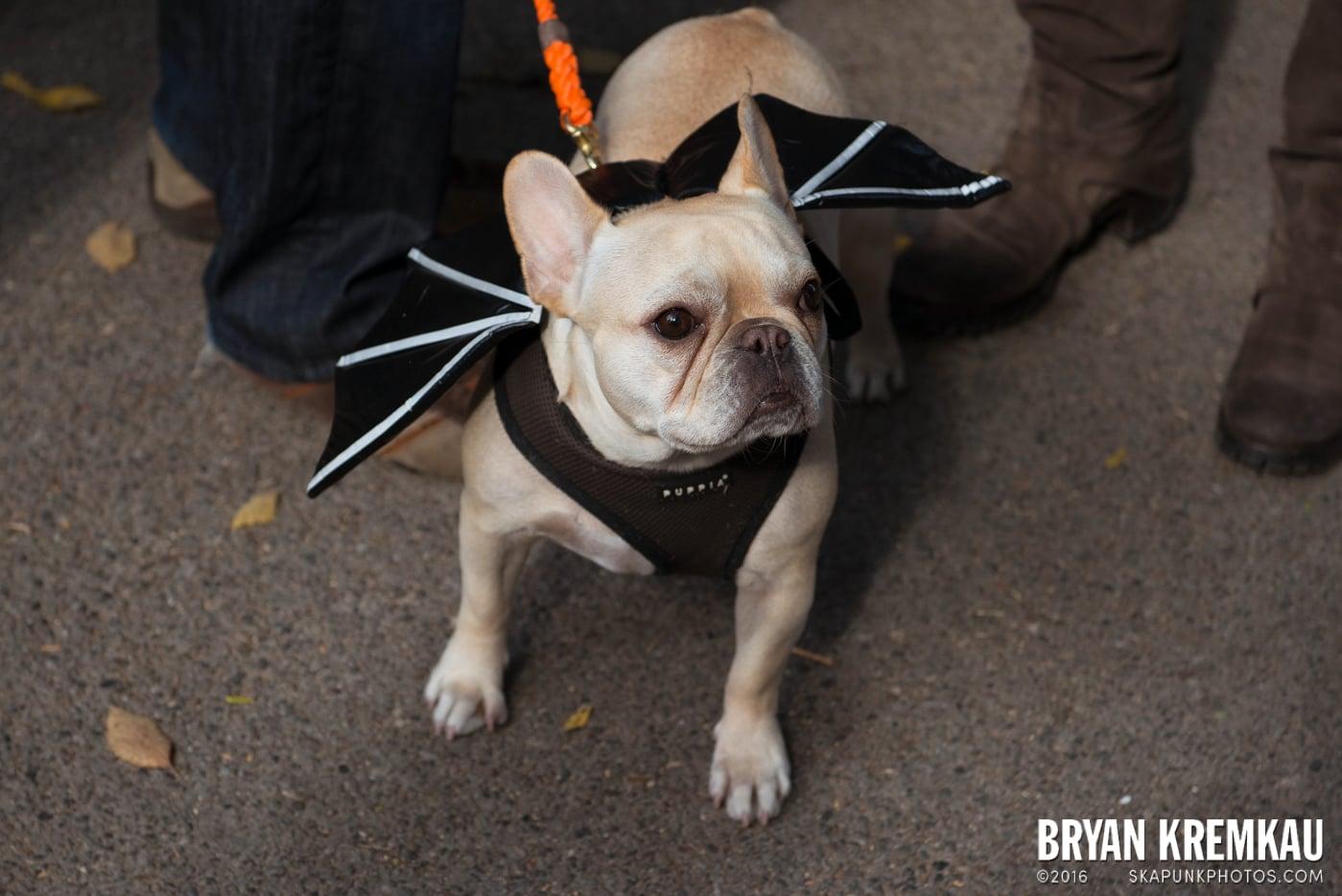 Tompkins Square Halloween Dog Parade 2013 @ Tompkins Square Park, NYC - 10.26.13 (3)