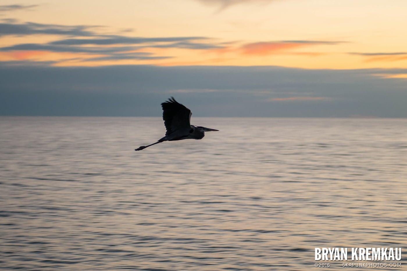 Sunsets, Astrophotography & Birds @ Venice, Florida - 10.25.14 - 11.5.14 (125)