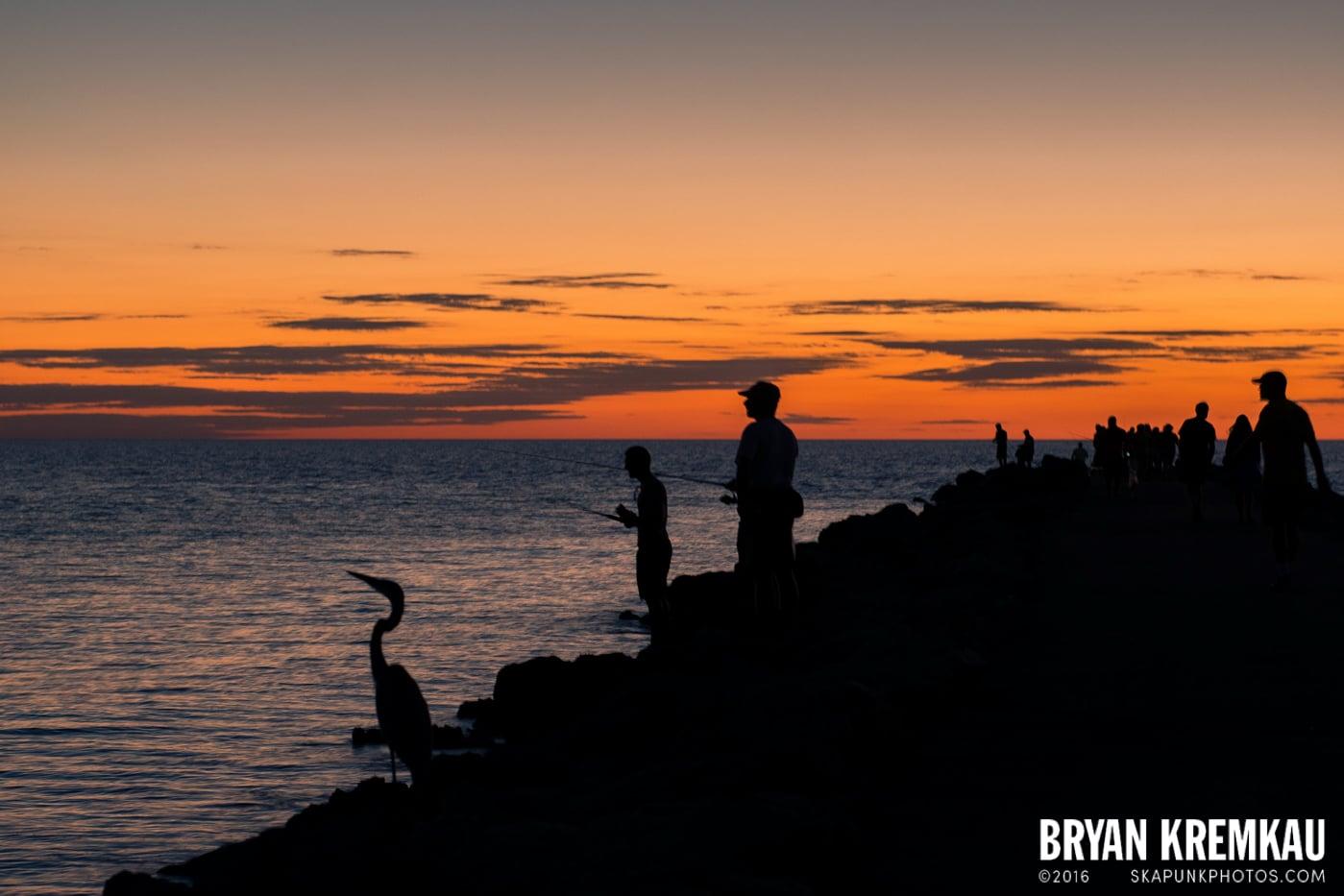 Sunsets, Astrophotography & Birds @ Venice, Florida - 10.25.14 - 11.5.14 (123)