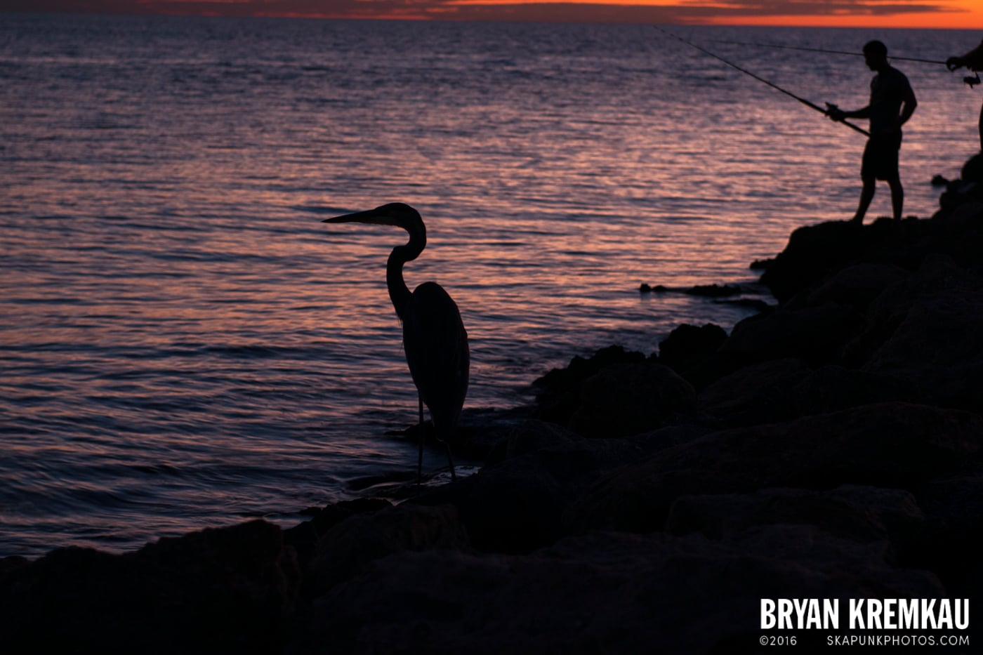 Sunsets, Astrophotography & Birds @ Venice, Florida - 10.25.14 - 11.5.14 (122)