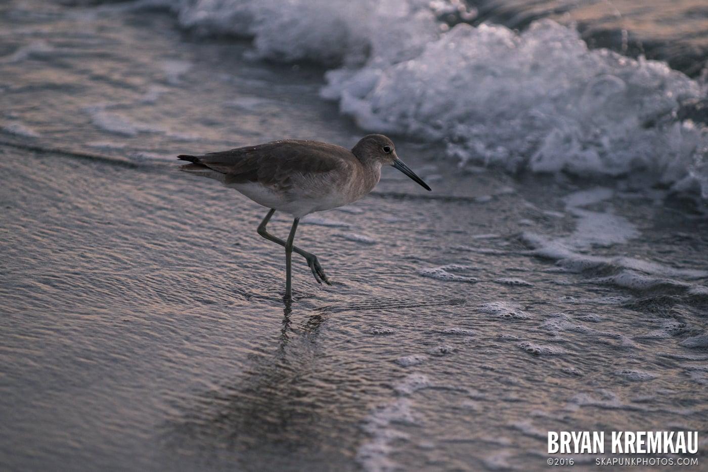 Sunsets, Astrophotography & Birds @ Venice, Florida - 10.25.14 - 11.5.14 (114)