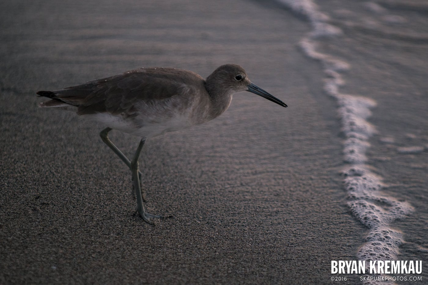 Sunsets, Astrophotography & Birds @ Venice, Florida - 10.25.14 - 11.5.14 (113)