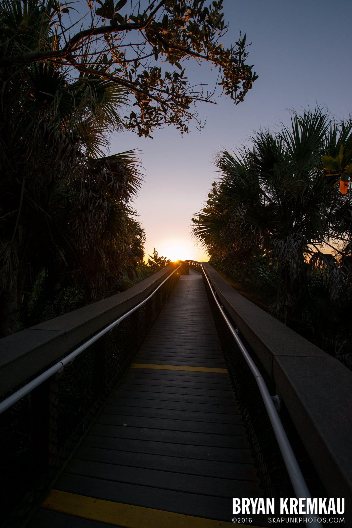 Sunsets, Astrophotography & Birds @ Venice, Florida - 10.25.14 - 11.5.14 (103)