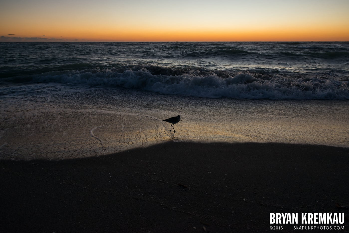 Sunsets, Astrophotography & Birds @ Venice, Florida - 10.25.14 - 11.5.14 (92)