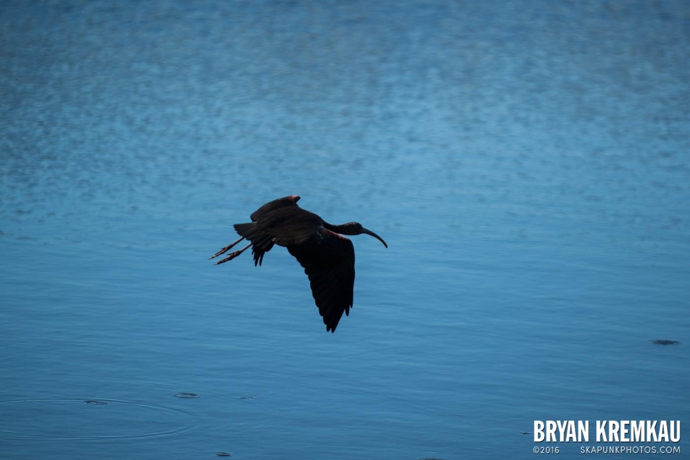 Sunsets, Astrophotography & Birds @ Venice, Florida - 10.25.14 - 11.5.14 (68)