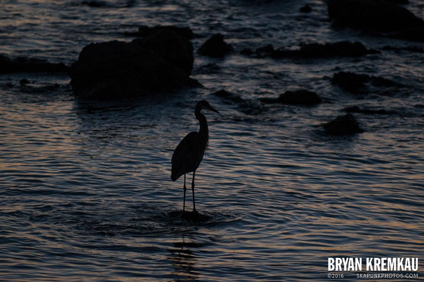 Sunsets, Astrophotography & Birds @ Venice, Florida - 10.25.14 - 11.5.14 (55)