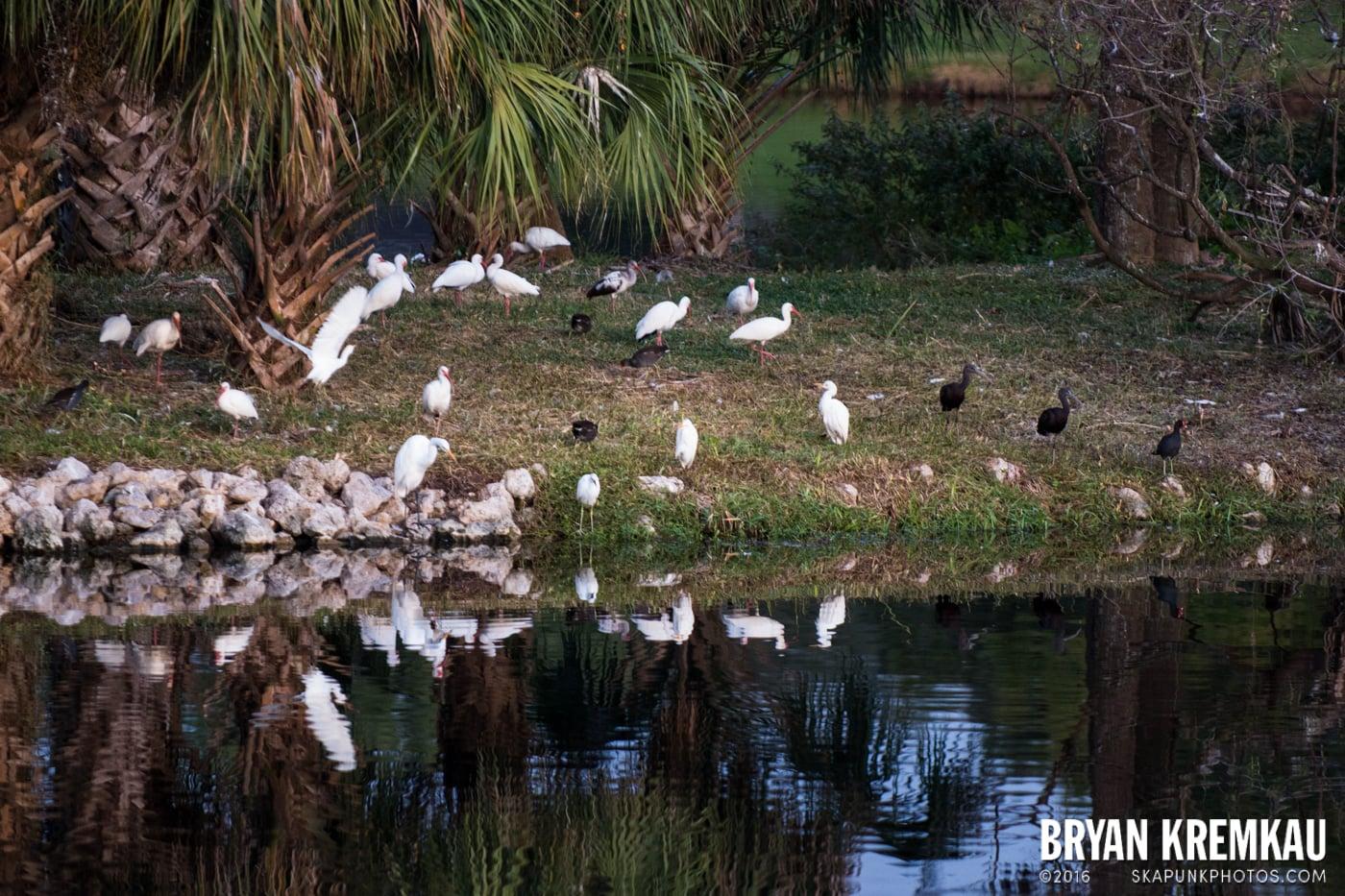 Sunsets, Astrophotography & Birds @ Venice, Florida - 10.25.14 - 11.5.14 (25)