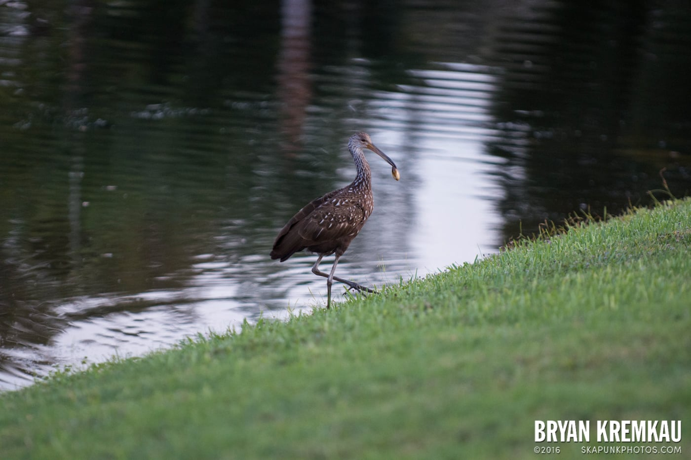 Sunsets, Astrophotography & Birds @ Venice, Florida - 10.25.14 - 11.5.14 (24)