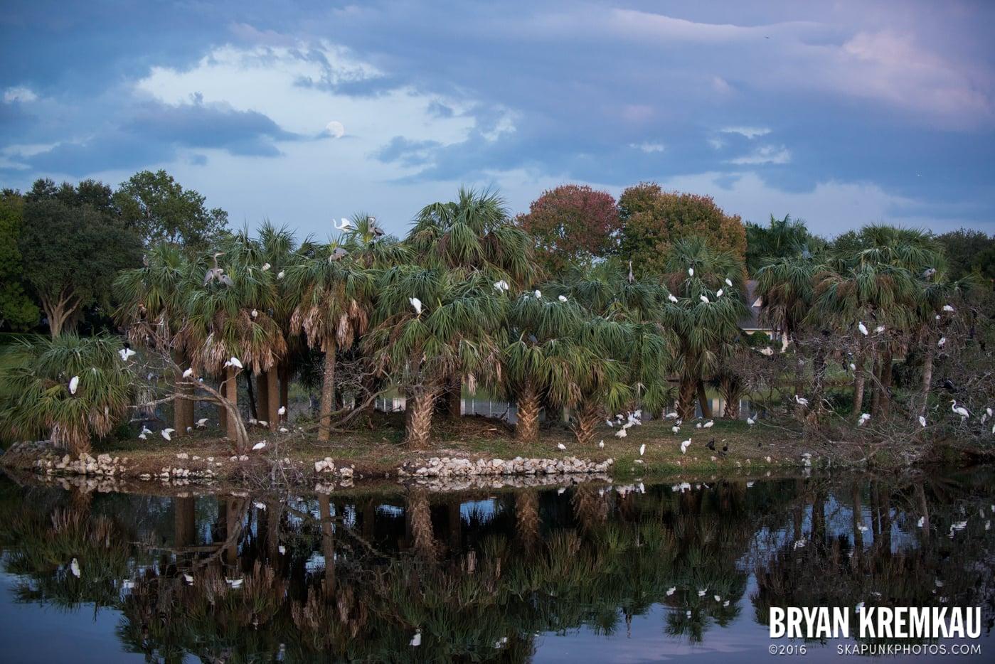 Sunsets, Astrophotography & Birds @ Venice, Florida - 10.25.14 - 11.5.14 (22)