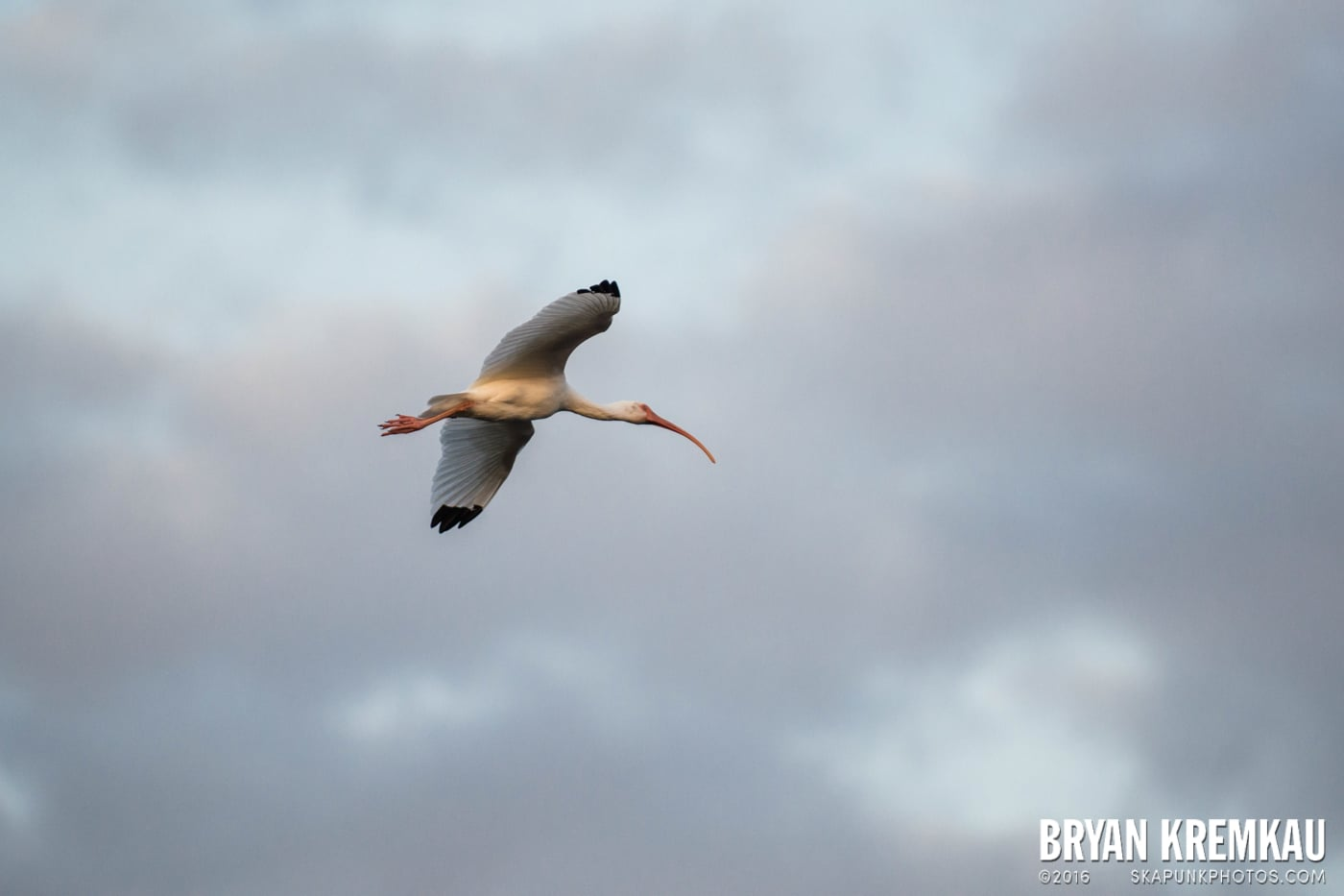 Sunsets, Astrophotography & Birds @ Venice, Florida - 10.25.14 - 11.5.14 (21)