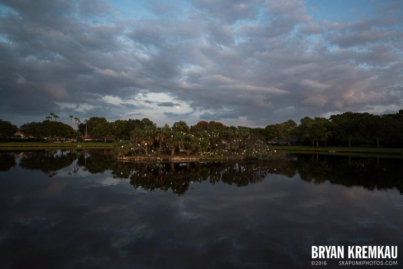 Sunsets, Astrophotography & Birds @ Venice, Florida - 10.25.14 - 11.5.14 (15)