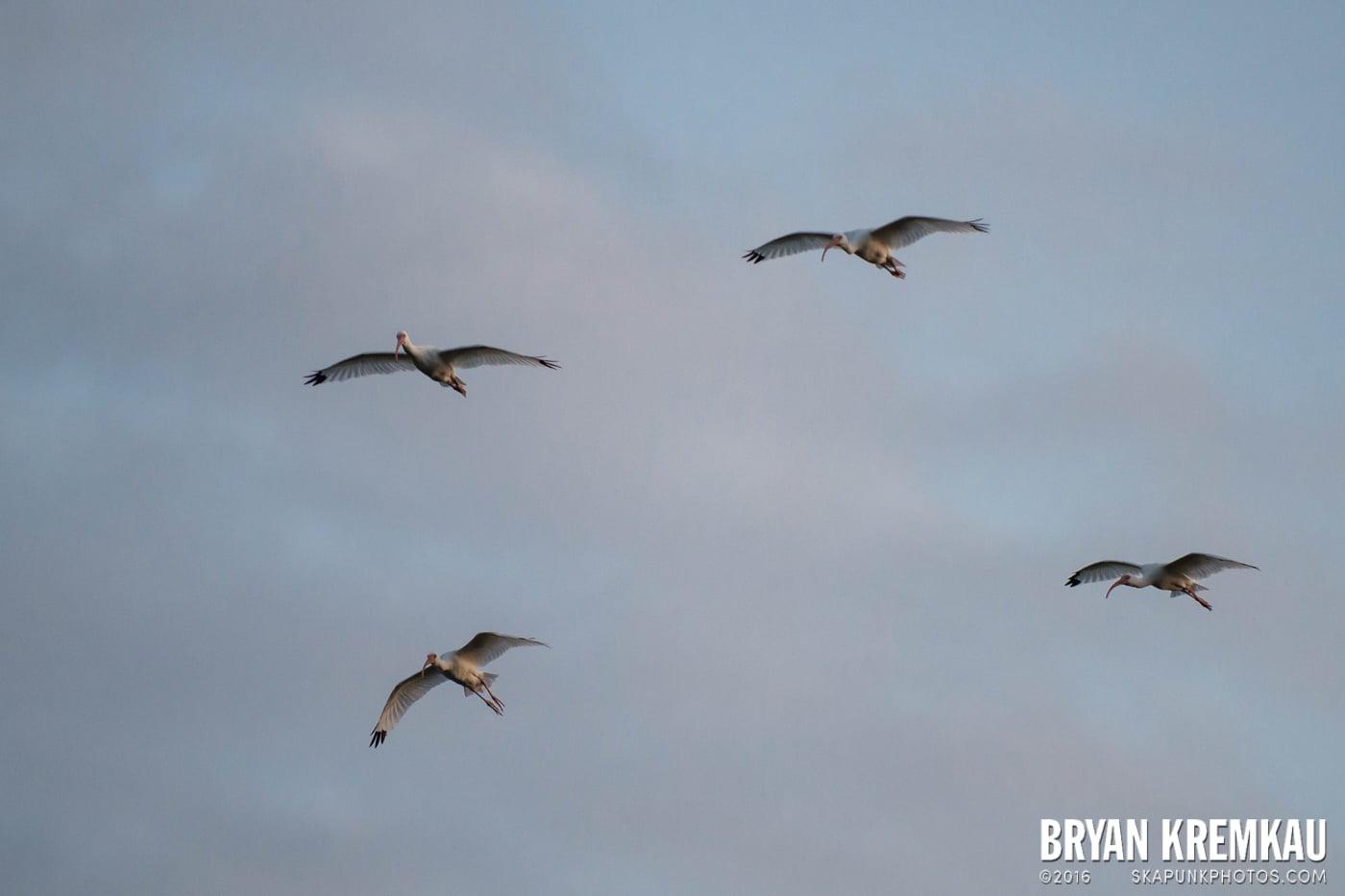 Sunsets, Astrophotography & Birds @ Venice, Florida - 10.25.14 - 11.5.14 (13)