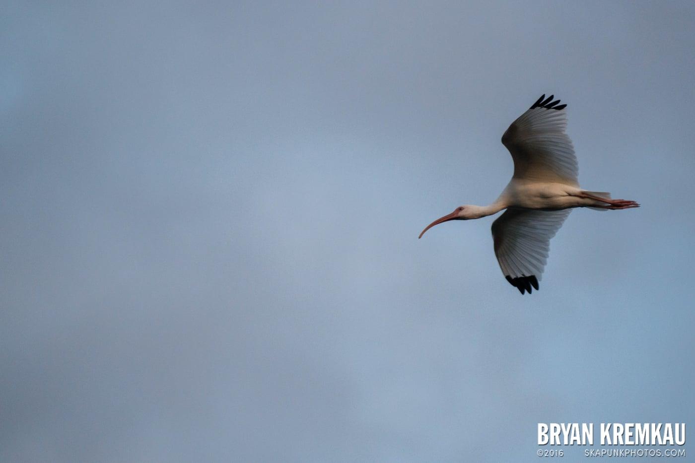 Sunsets, Astrophotography & Birds @ Venice, Florida - 10.25.14 - 11.5.14 (12)