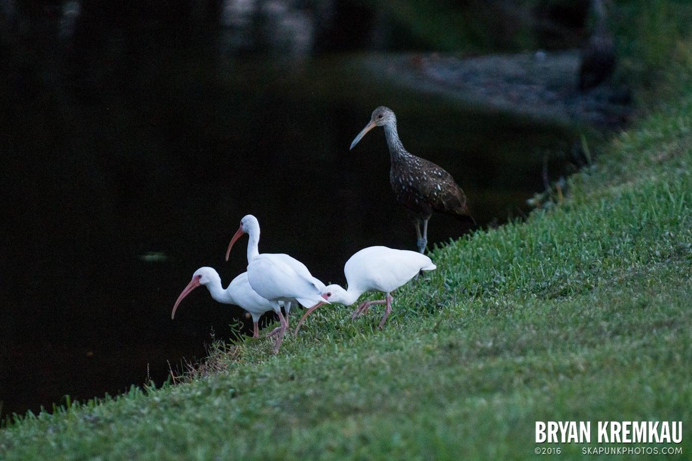Sunsets, Astrophotography & Birds @ Venice, Florida - 10.25.14 - 11.5.14 (11)