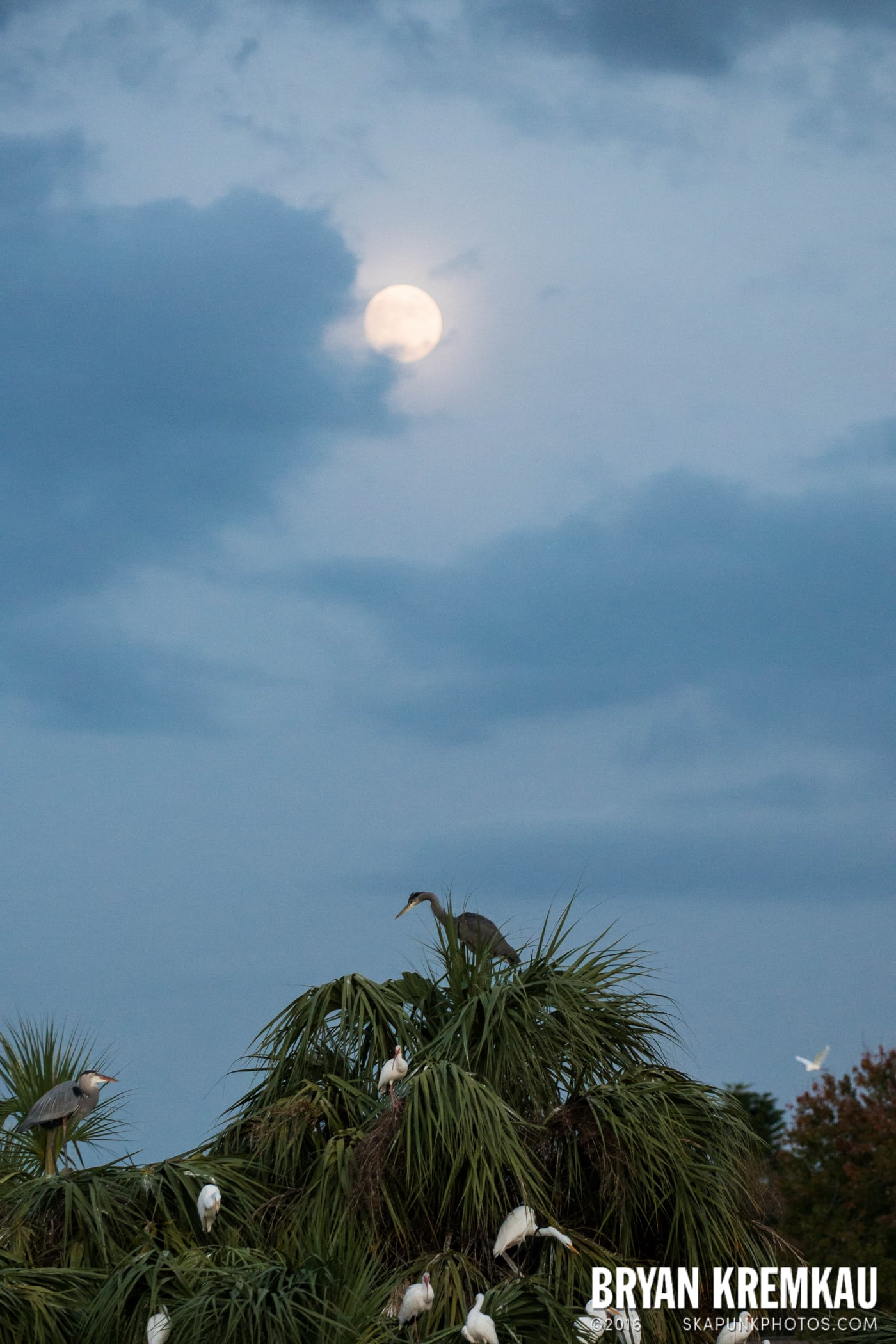Sunsets, Astrophotography & Birds @ Venice, Florida - 10.25.14 - 11.5.14 (10)