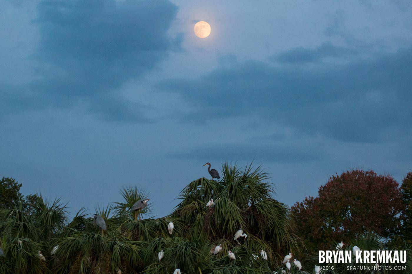 Sunsets, Astrophotography & Birds @ Venice, Florida - 10.25.14 - 11.5.14 (9)