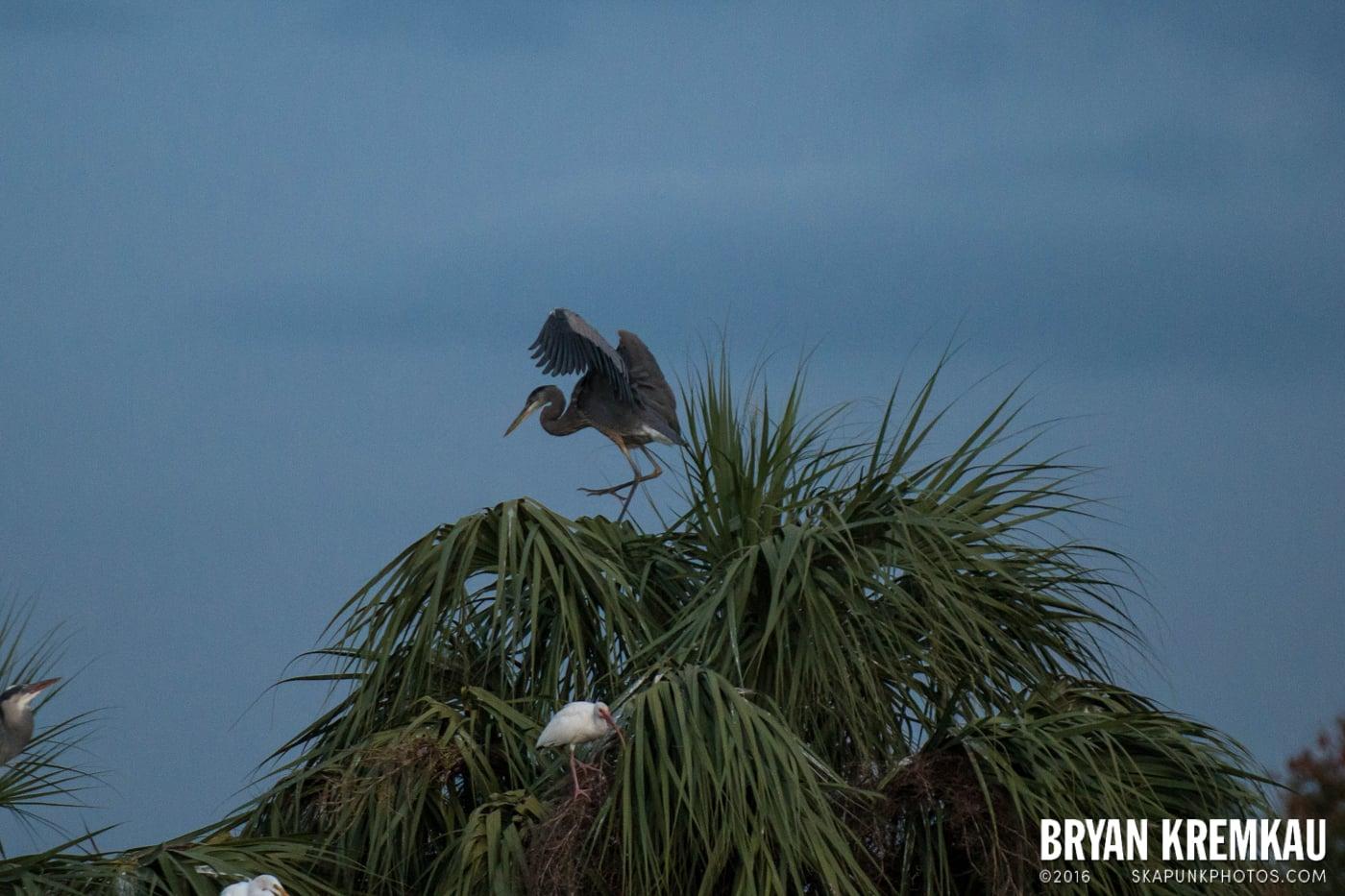 Sunsets, Astrophotography & Birds @ Venice, Florida - 10.25.14 - 11.5.14 (8)