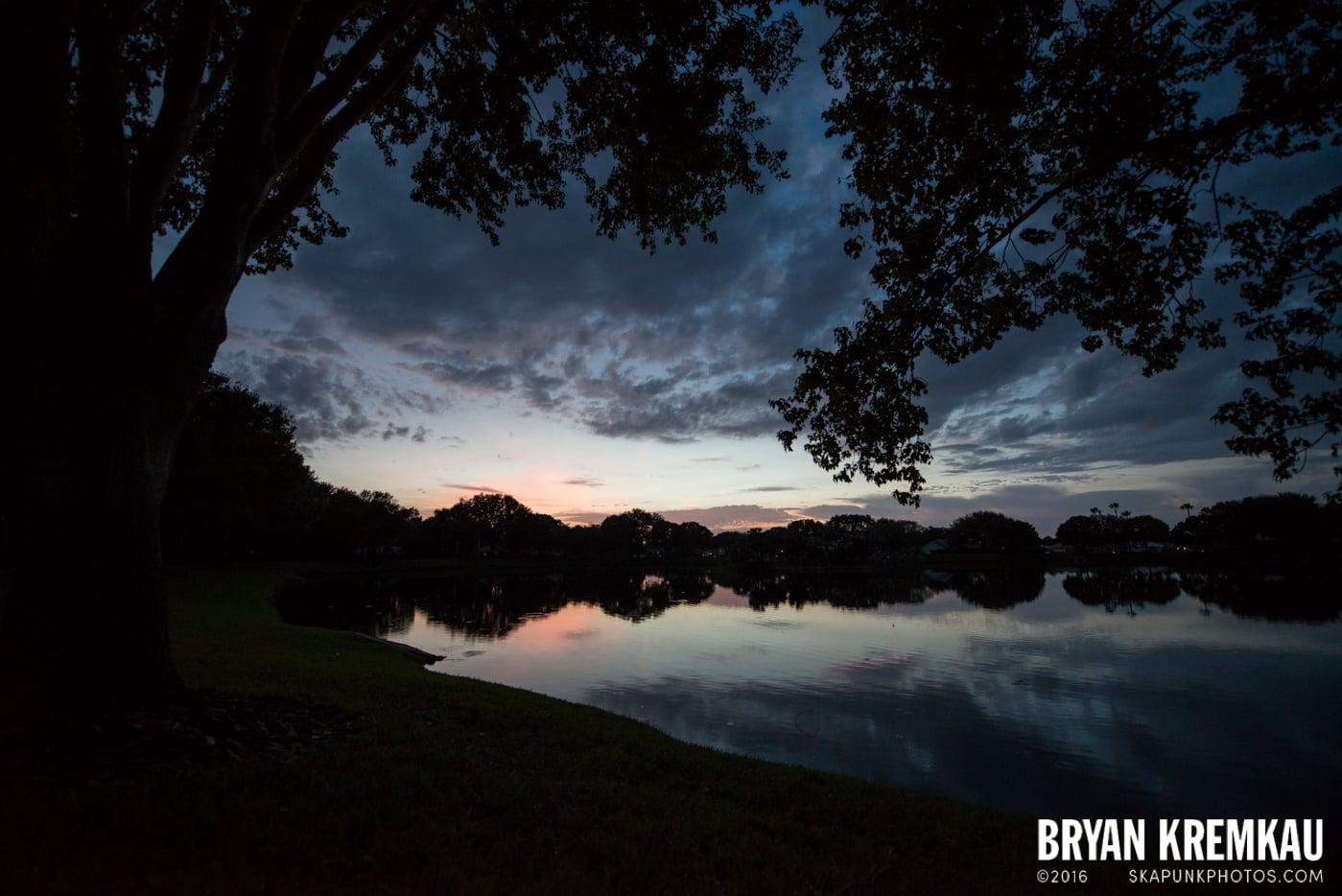 Sunsets, Astrophotography & Birds @ Venice, Florida - 10.25.14 - 11.5.14 (3)