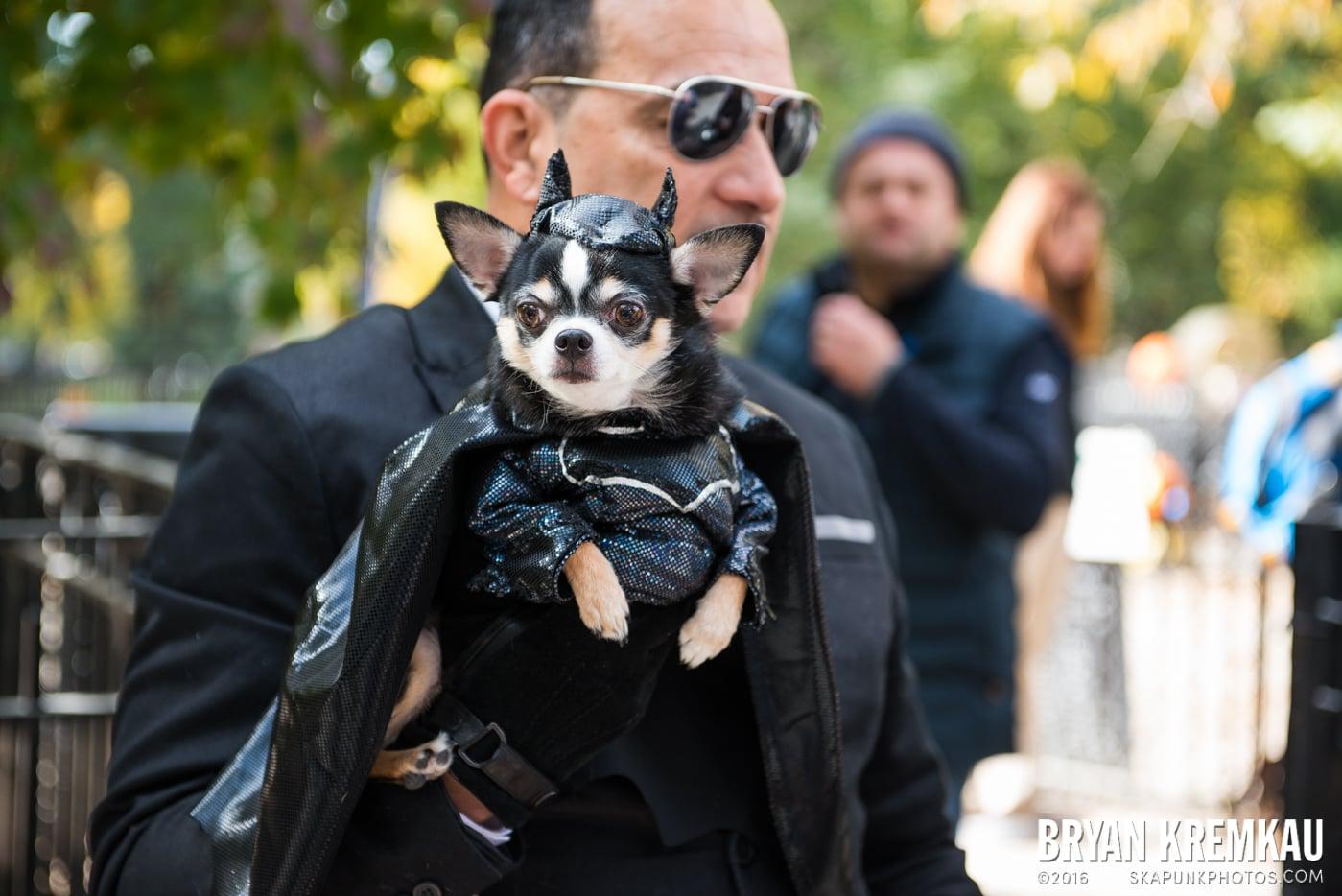 Tompkins Square Halloween Dog Parade 2015 @ Tompkins Square Park, NYC – 10.24.15 (75)