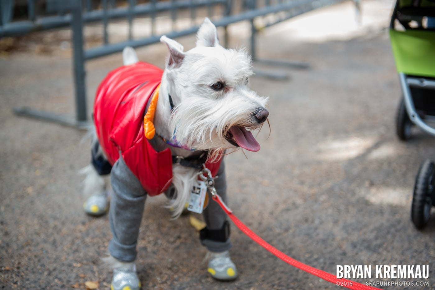 Tompkins Square Halloween Dog Parade 2015 @ Tompkins Square Park, NYC – 10.24.15 (74)