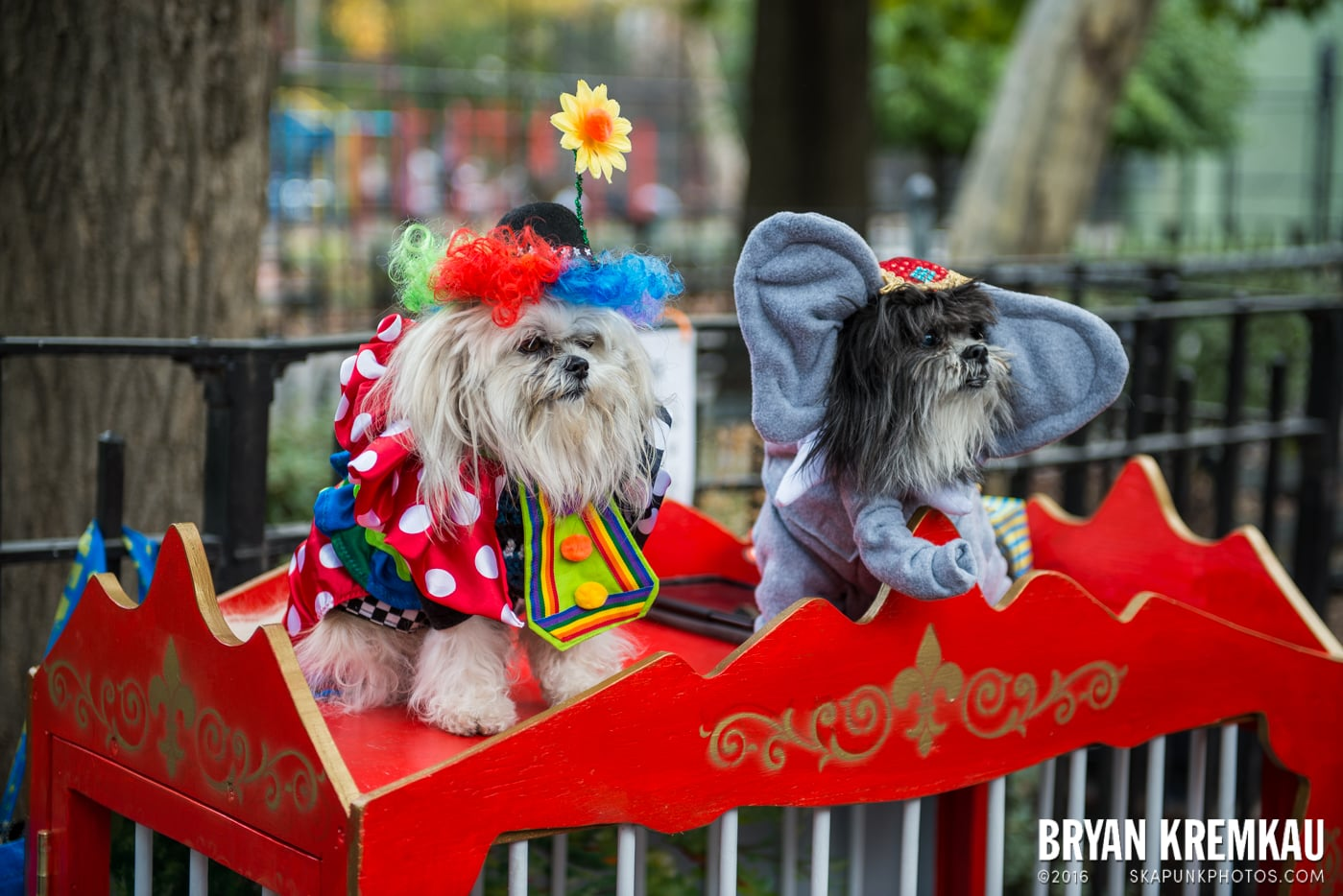 Tompkins Square Halloween Dog Parade 2015 @ Tompkins Square Park, NYC – 10.24.15 (67)