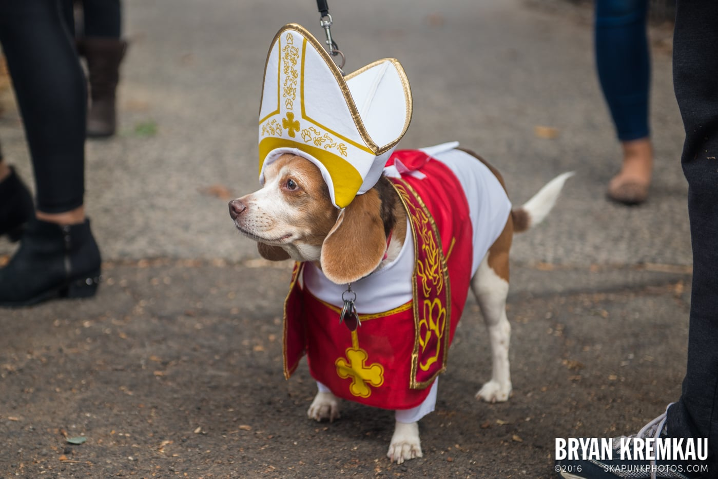 Tompkins Square Halloween Dog Parade 2015 @ Tompkins Square Park, NYC – 10.24.15 (65)