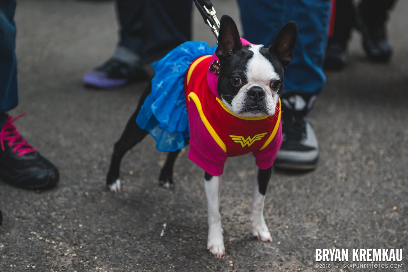 Tompkins Square Halloween Dog Parade 2015 @ Tompkins Square Park, NYC – 10.24.15 (64)