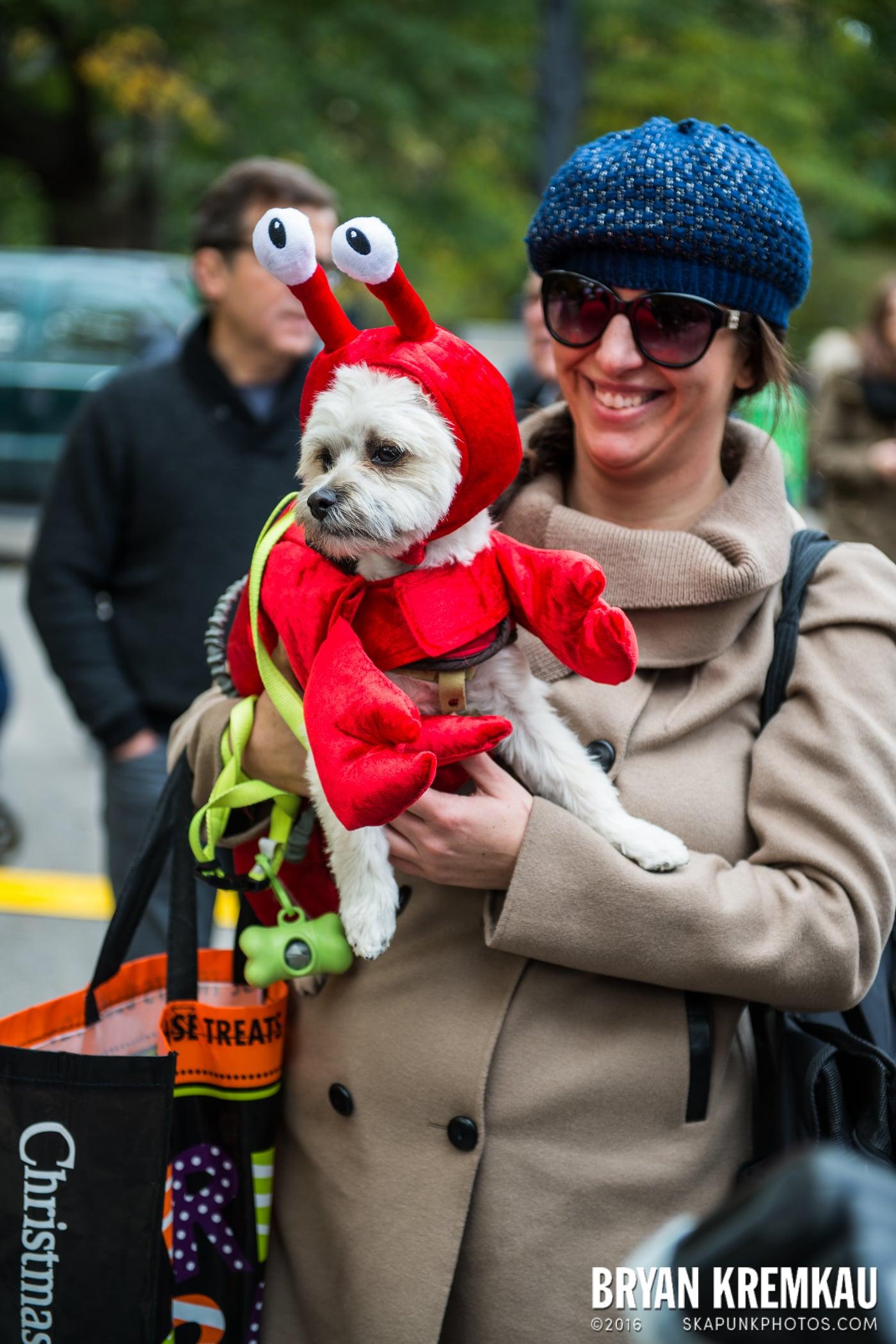 Tompkins Square Halloween Dog Parade 2015 @ Tompkins Square Park, NYC – 10.24.15 (61)