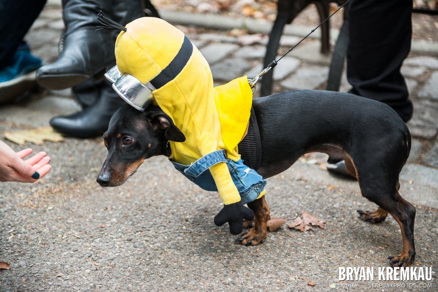 Tompkins Square Halloween Dog Parade 2015 @ Tompkins Square Park, NYC – 10.24.15 (55)