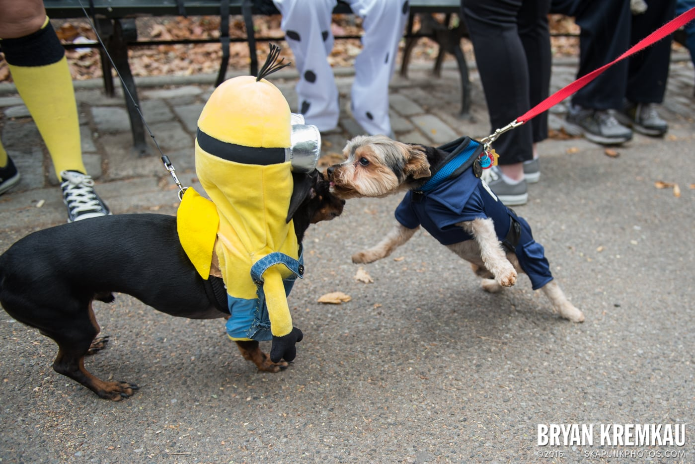 Tompkins Square Halloween Dog Parade 2015 @ Tompkins Square Park, NYC – 10.24.15 (54)