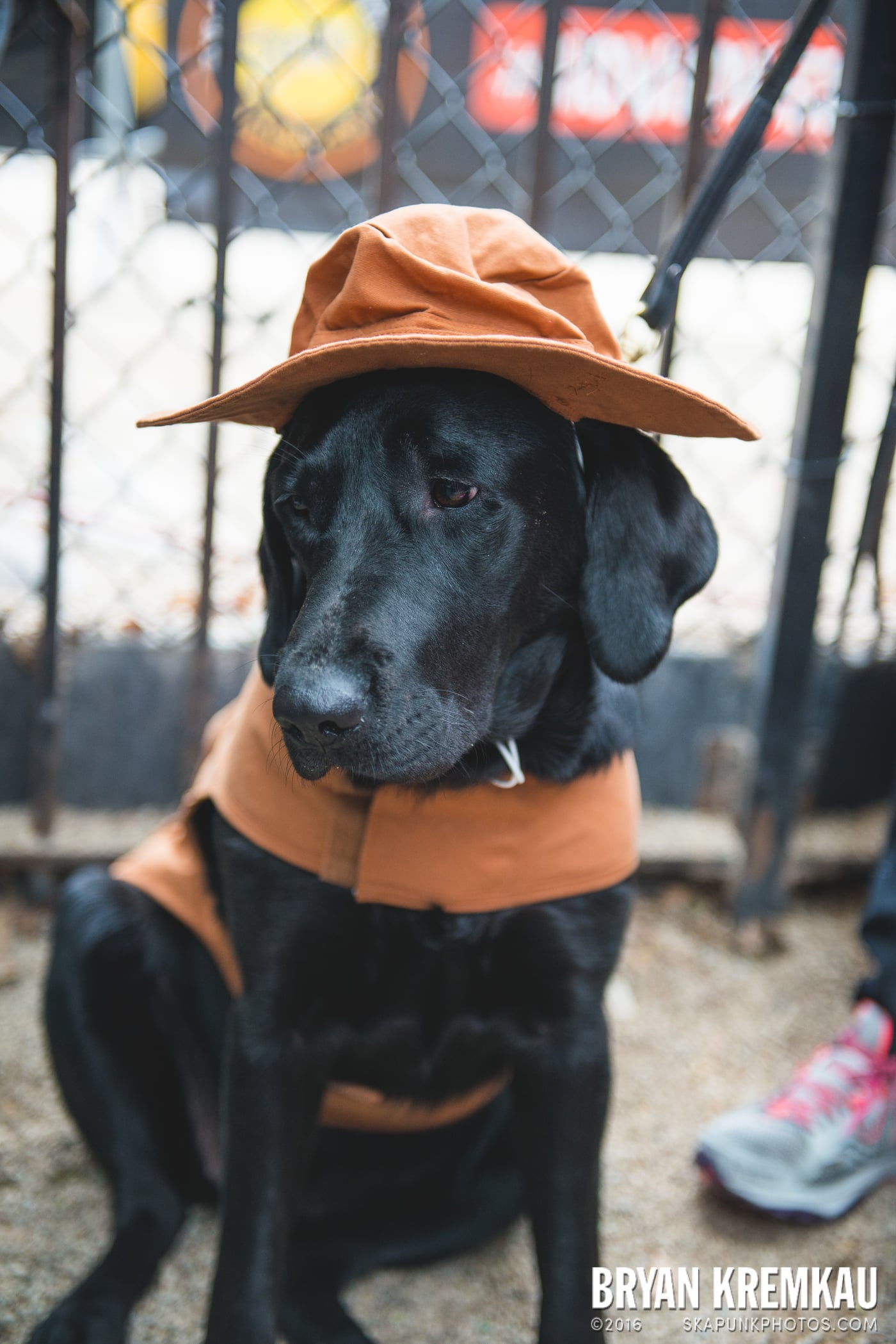 Tompkins Square Halloween Dog Parade 2015 @ Tompkins Square Park, NYC – 10.24.15 (53)