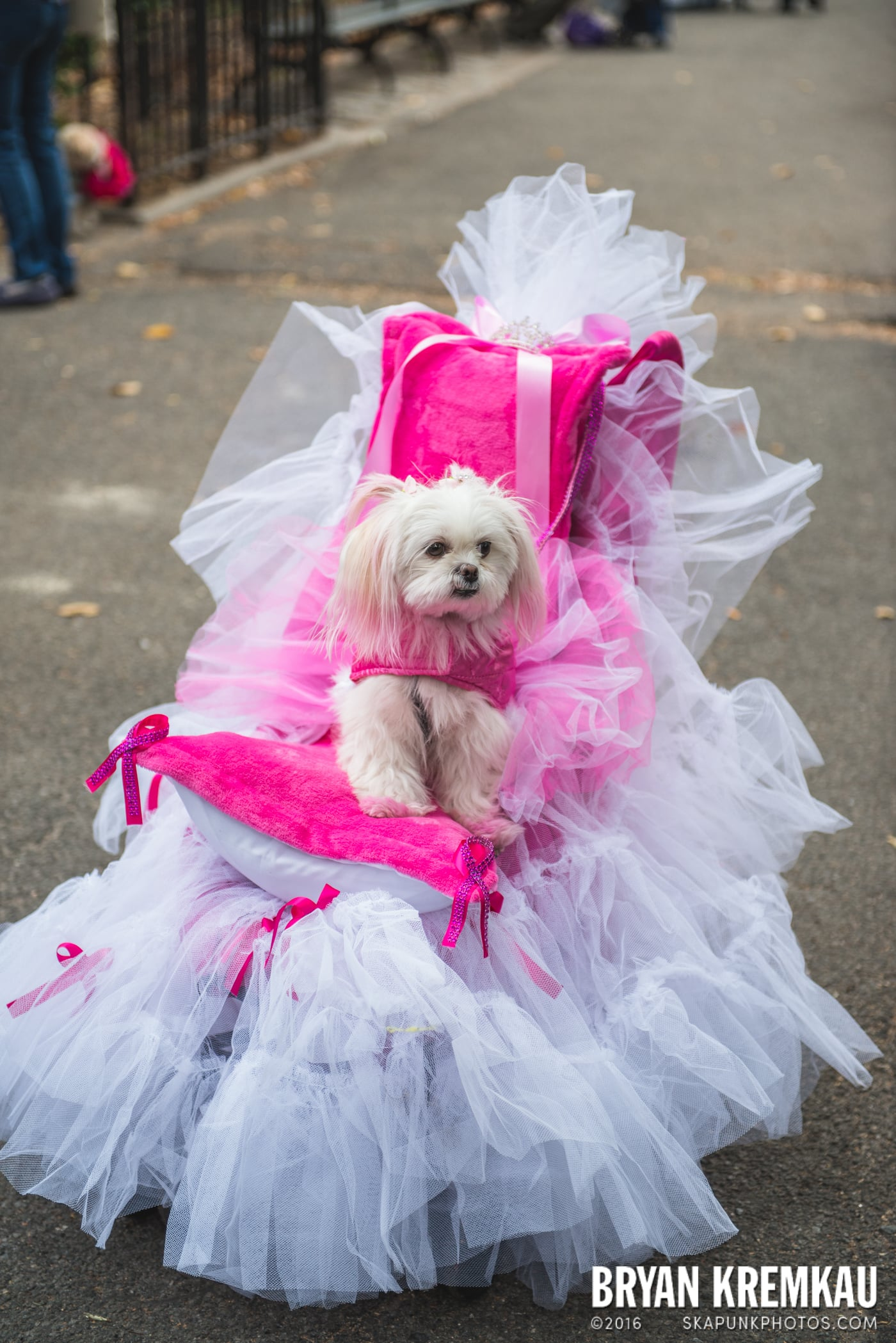 Tompkins Square Halloween Dog Parade 2015 @ Tompkins Square Park, NYC – 10.24.15 (49)