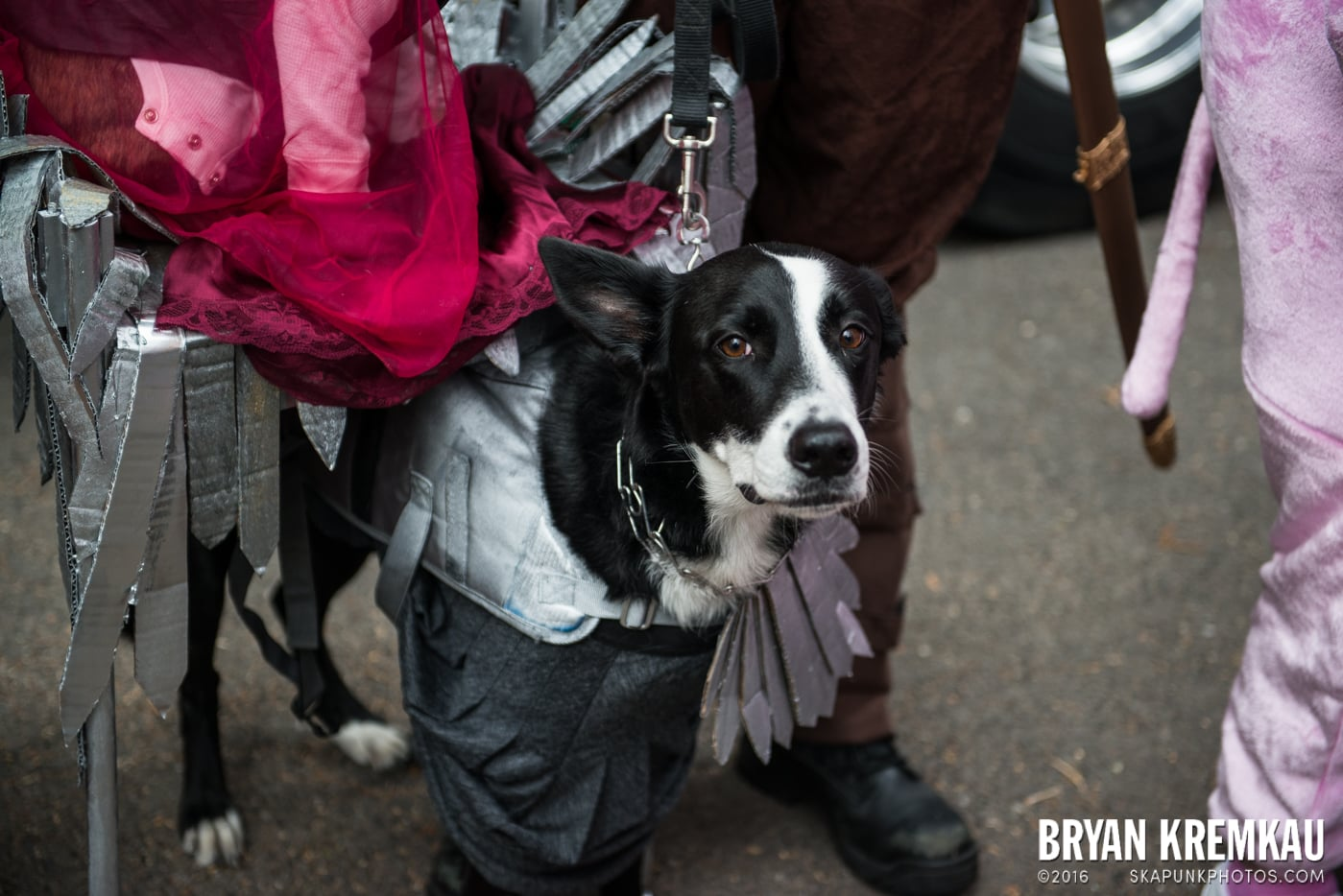 Tompkins Square Halloween Dog Parade 2015 @ Tompkins Square Park, NYC – 10.24.15 (46)