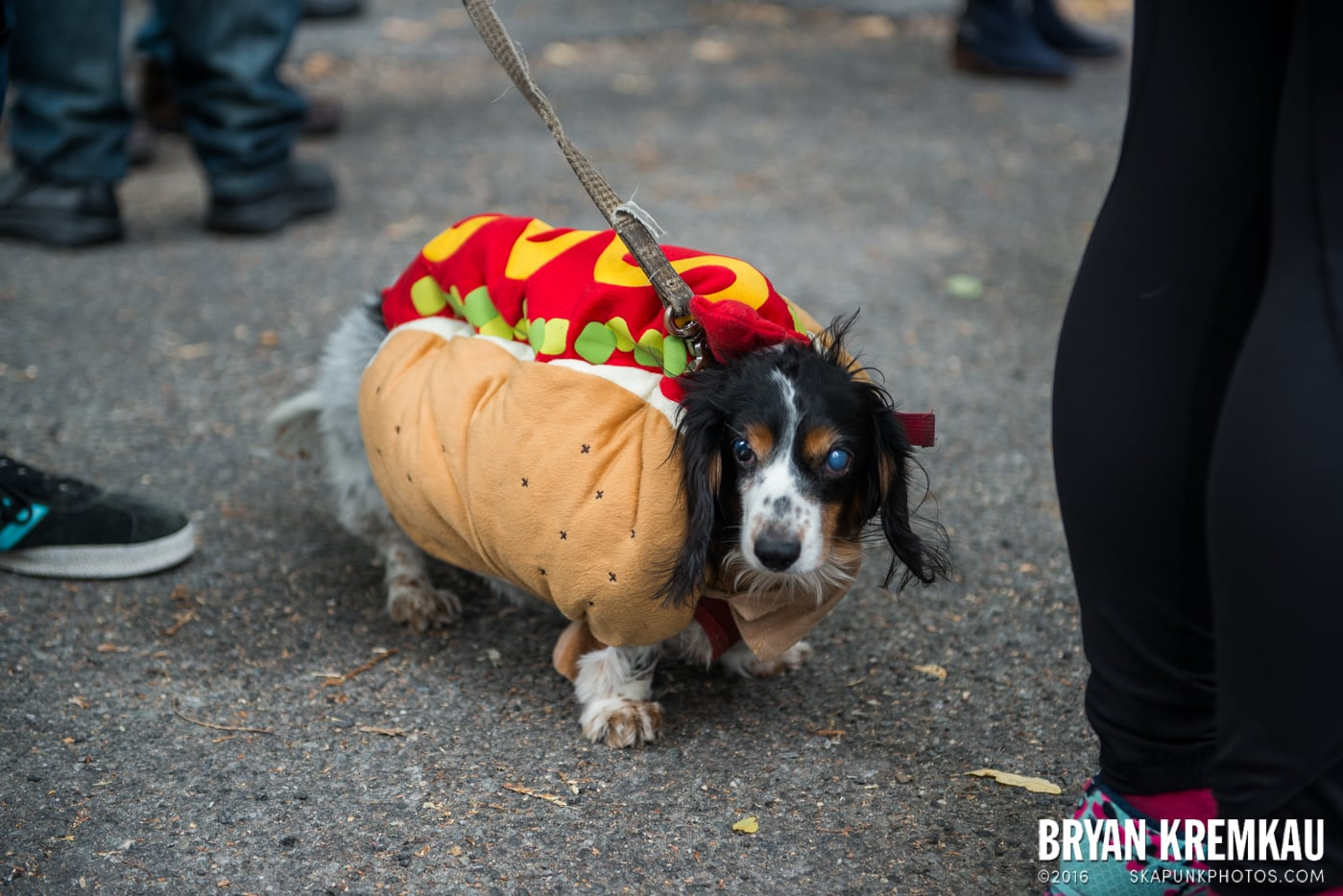 Tompkins Square Halloween Dog Parade 2015 @ Tompkins Square Park, NYC – 10.24.15 (39)