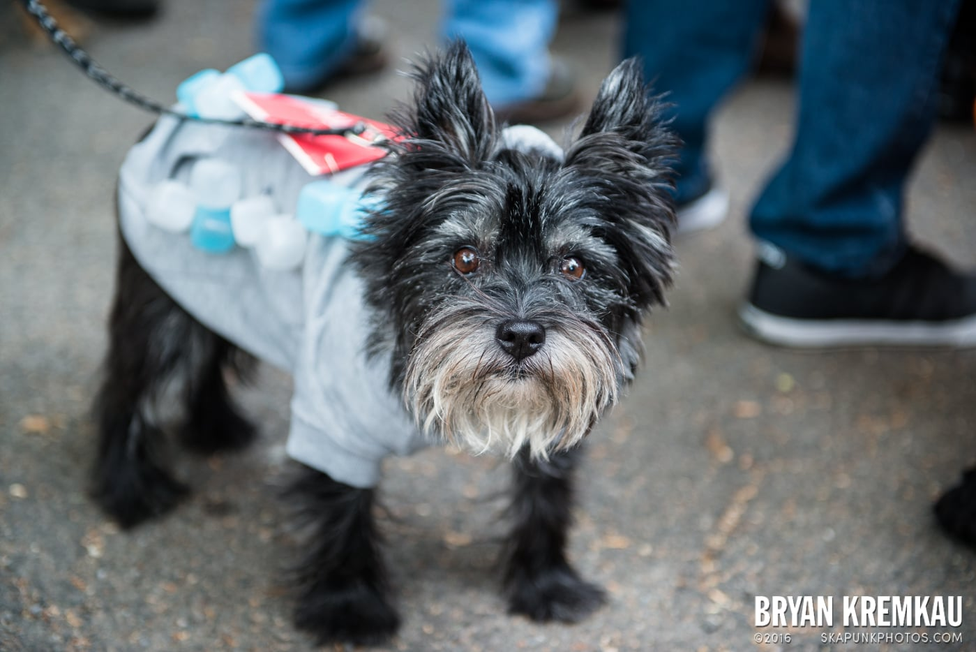 Tompkins Square Halloween Dog Parade 2015 @ Tompkins Square Park, NYC – 10.24.15 (38)