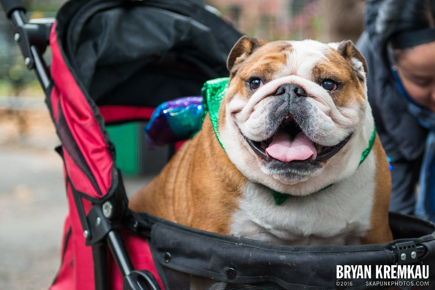 Tompkins Square Halloween Dog Parade 2015 @ Tompkins Square Park, NYC – 10.24.15 (37)